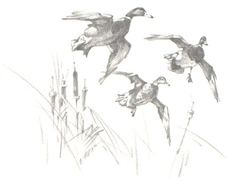 Three Mallards Flying
